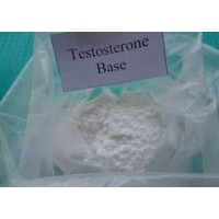 Testosterone Base Powder
